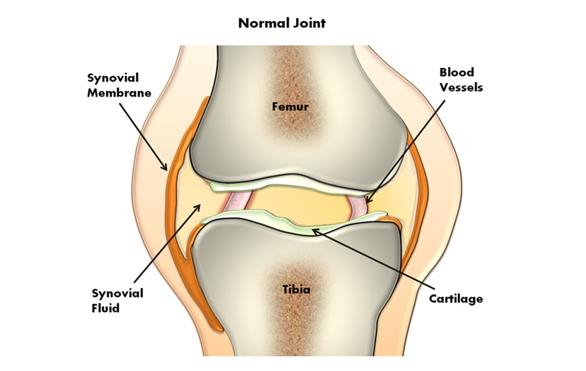 Diagram of knee joint - Painful joints? They might need lubrication blog post